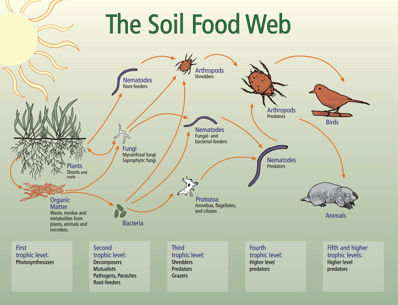 nrcs_usda_Soil_Food-Web_800.jpg